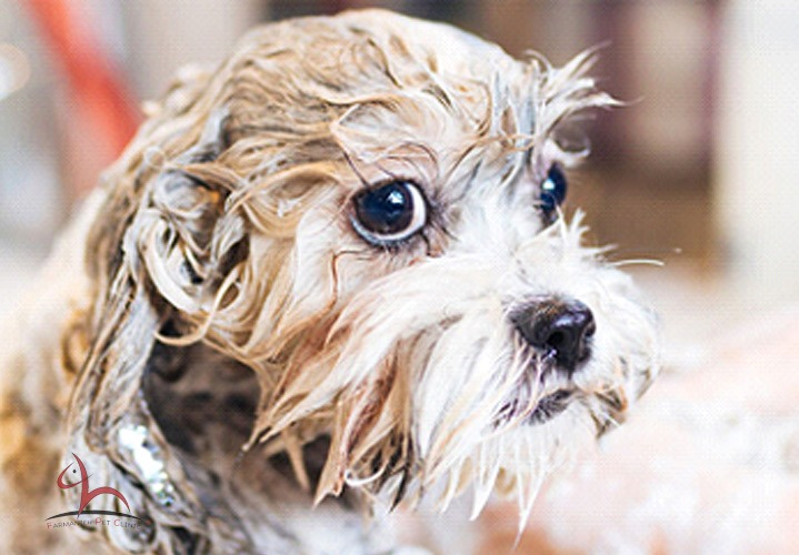 حمام کردن سگ